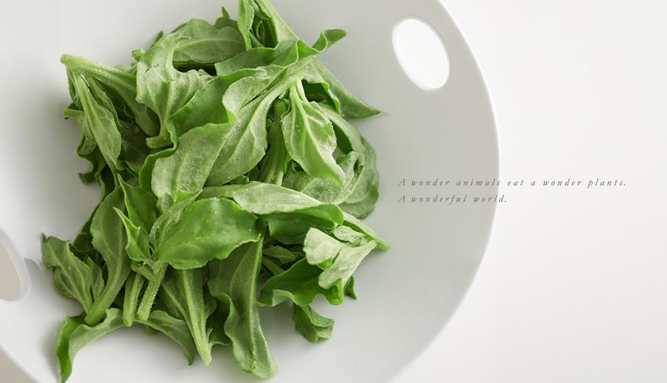 A wonder animals eat a wonder plants. A wonderful world.